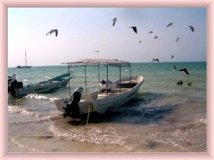 Holbox fish and birds by the shore