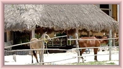 Holbox island horseback riding photo