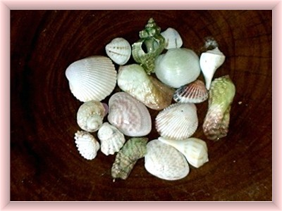 Holbox  island sea shells